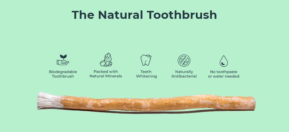 Set Of 10 Fresh Natural Toothbrush Misvak Organic Vegan Herbal Twig Miswak Arak, Siwak, Miswaak مسواك طيبة ,  Soft  10 Pcs Reis
